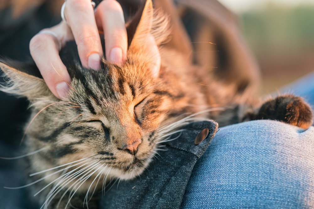 Профилактика болезней от кошек
