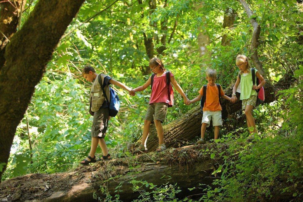 12. Уроки биологии для детей