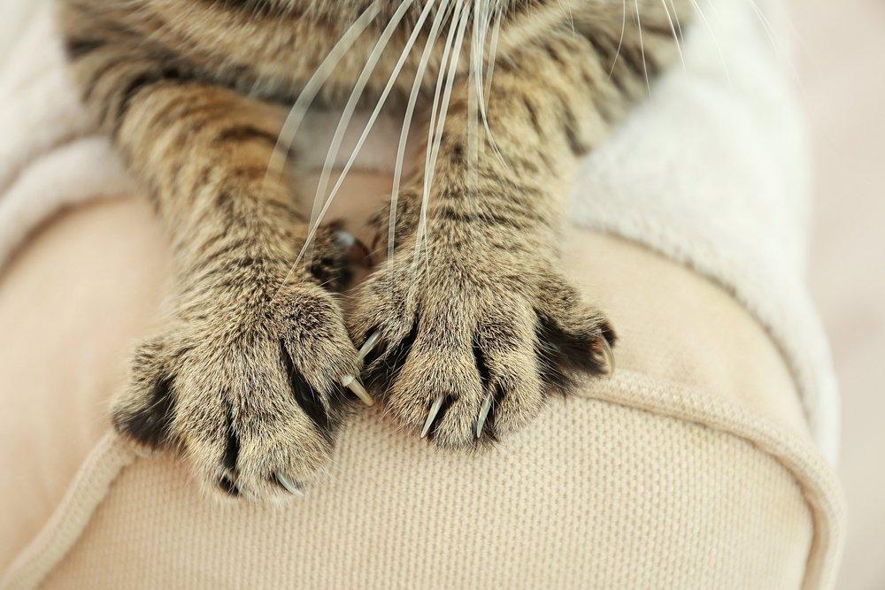 Когда возможно заражение инфекцией при укусах кошки?