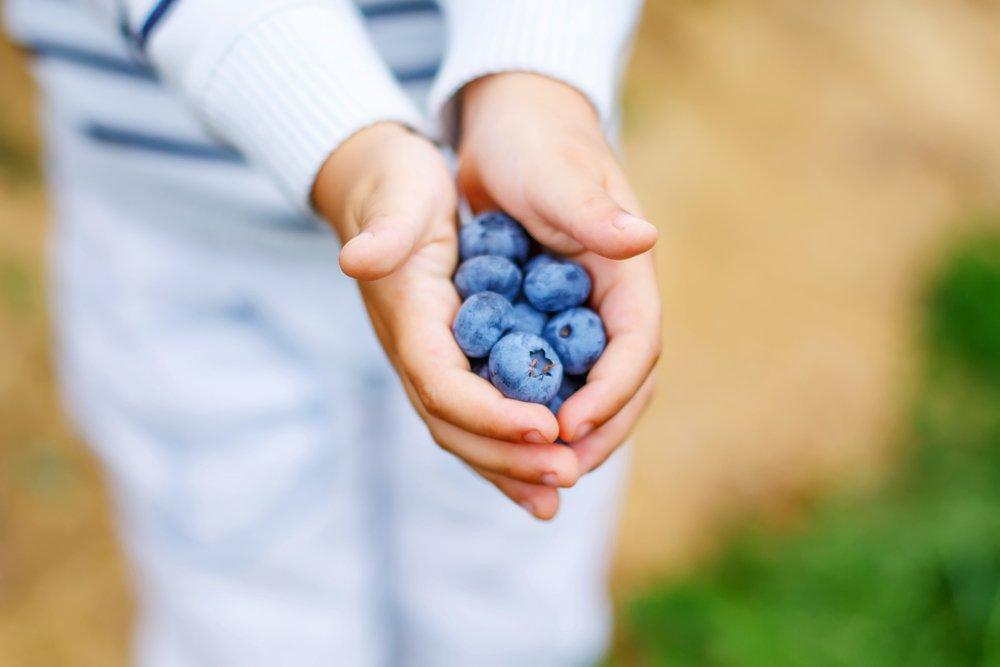 Садовые ягоды в питании малышей