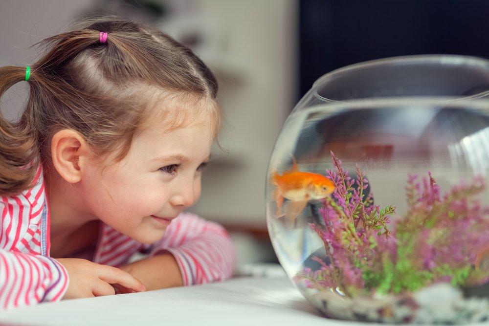 Рыбки фотографии для детей