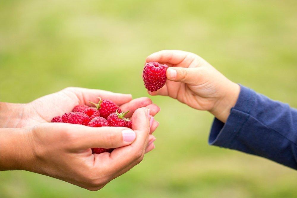 Могут ли быть опасными ягоды?