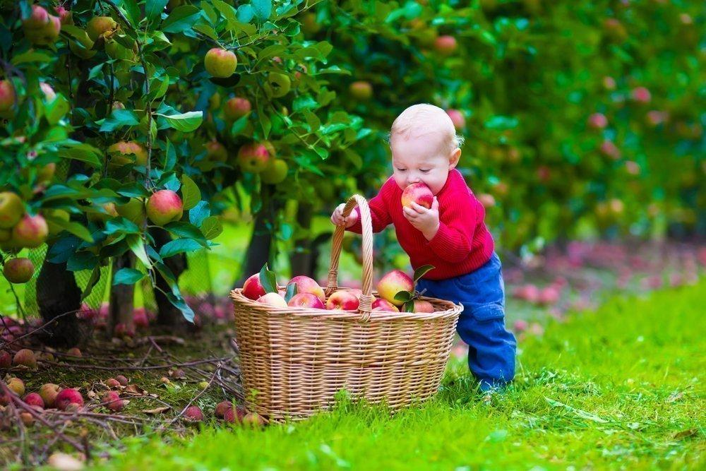 Когда следует давать первые фрукты?