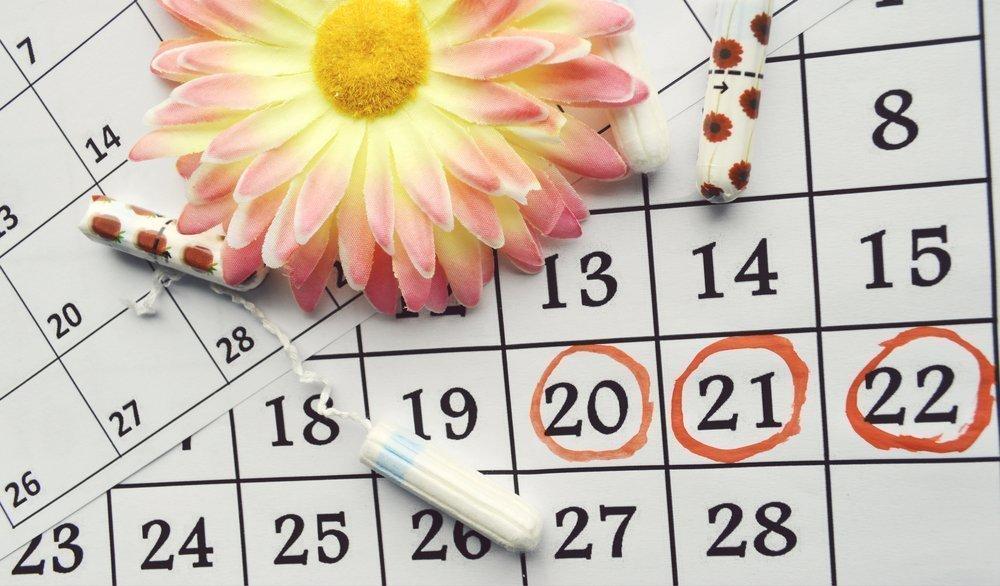 Менструальный цикл у женщин
