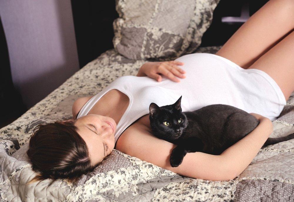 Кошка дома беременность