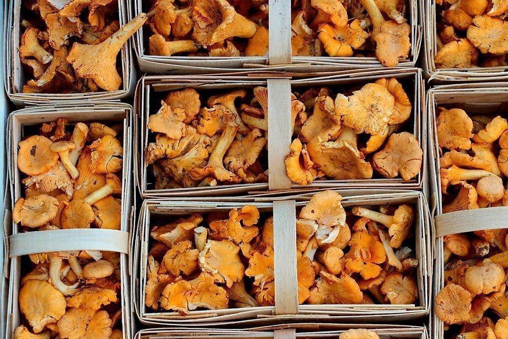 Отравление грибами: рвота, судороги, токсикоз