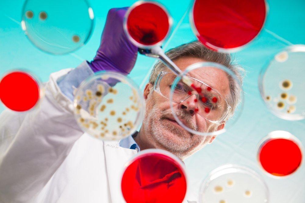 Роль бактерий для человека