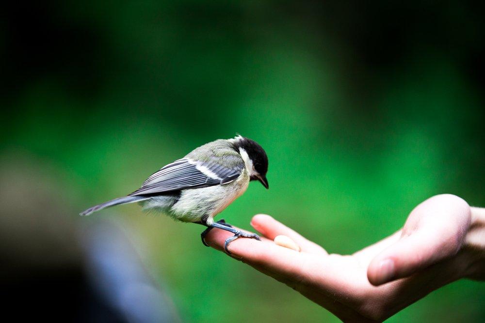 Заражение паразитами от птиц