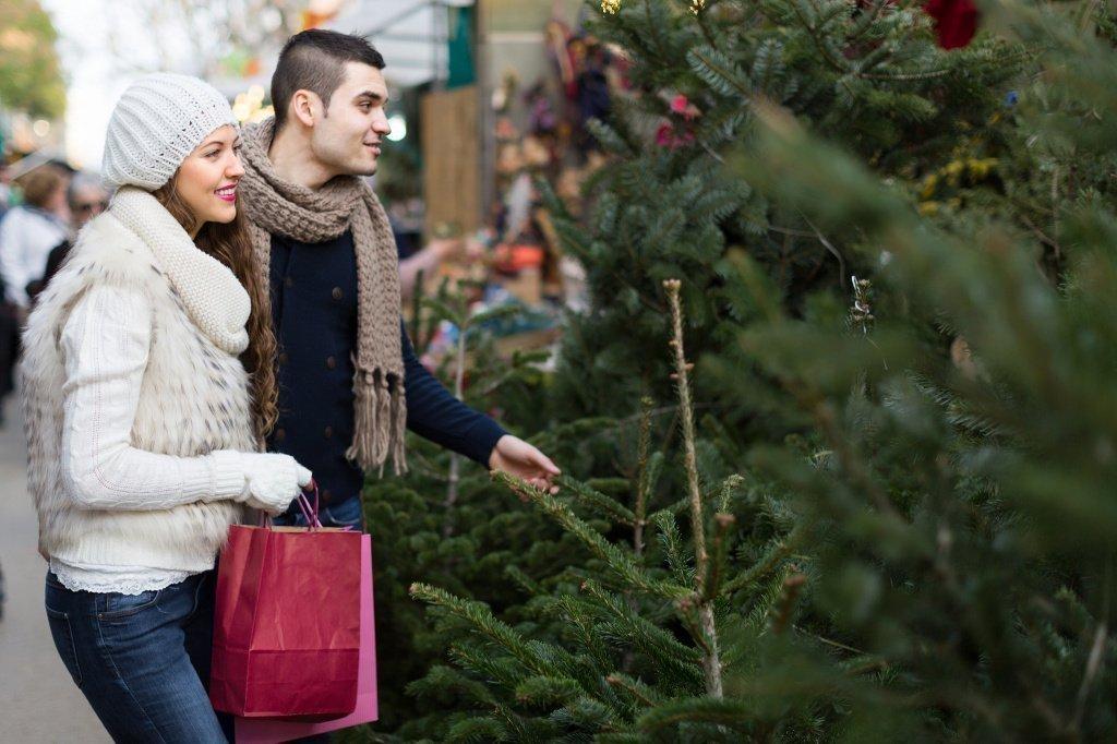 Покупаем живую елку для детей и не только