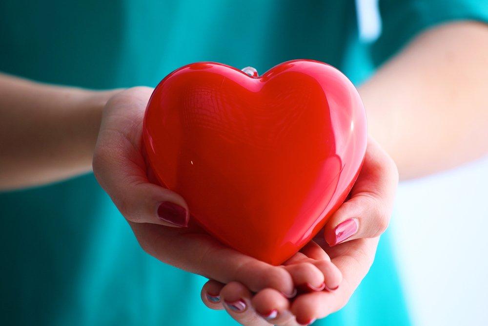 Работа органа: предсердия, желудочки сердца и электрическая система