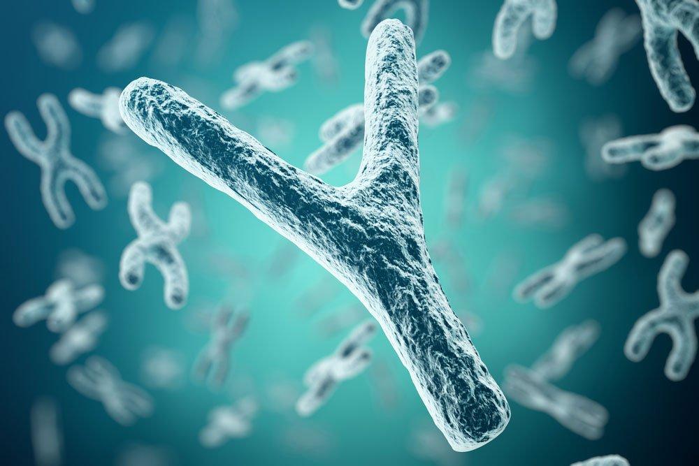 Y-хромосома: тело и личность