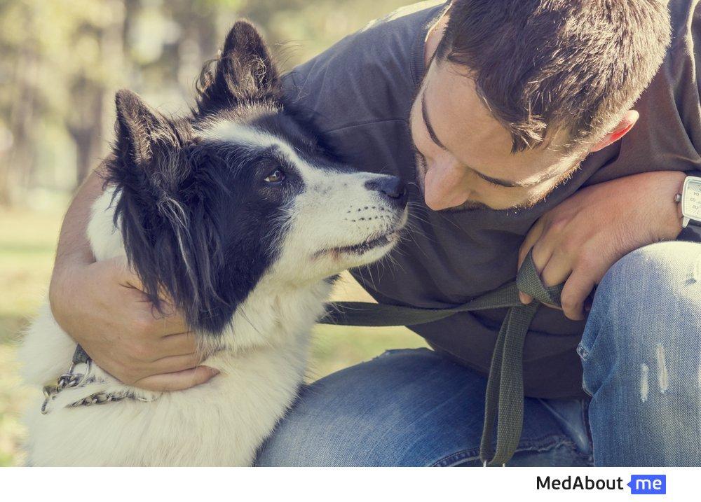 Занятия анималотерапией с собаками (канистерапия)