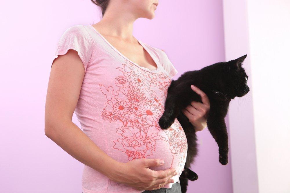 Наличие домашних животных при беременности