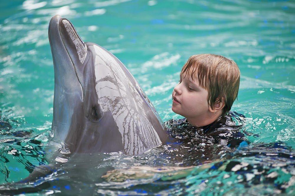 Положительное влияние дельфинотерапии на здоровье детей