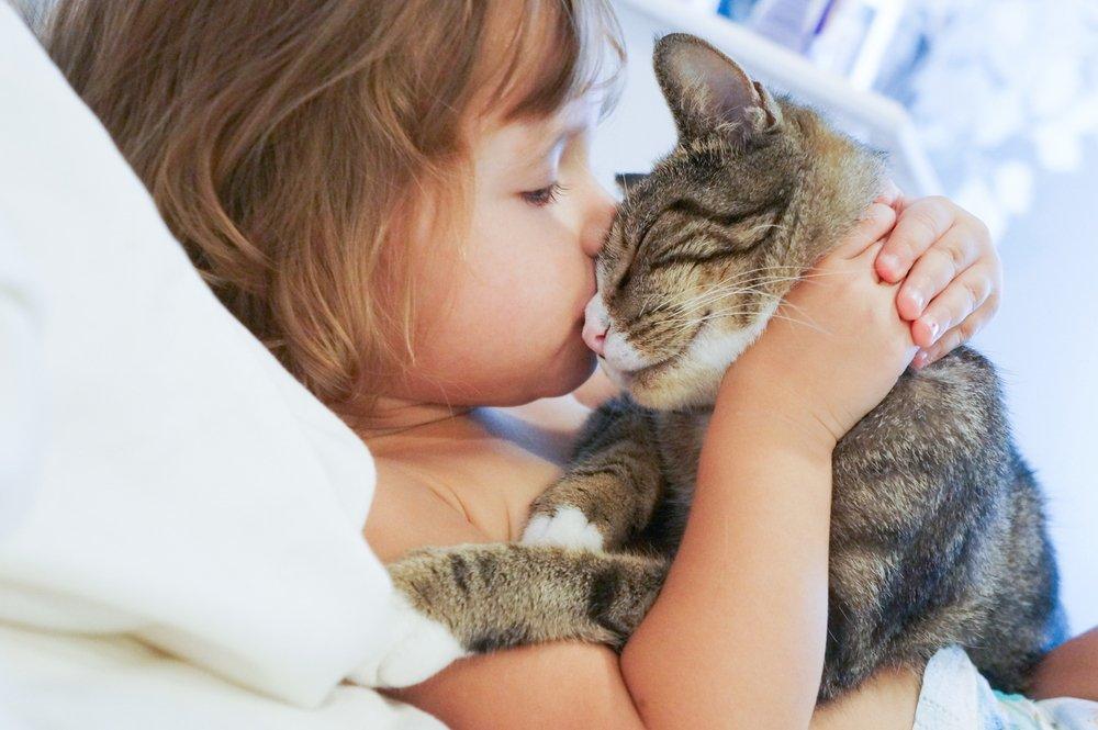 Гельминтоз — наиболее распространенная опасность для «кошатников»
