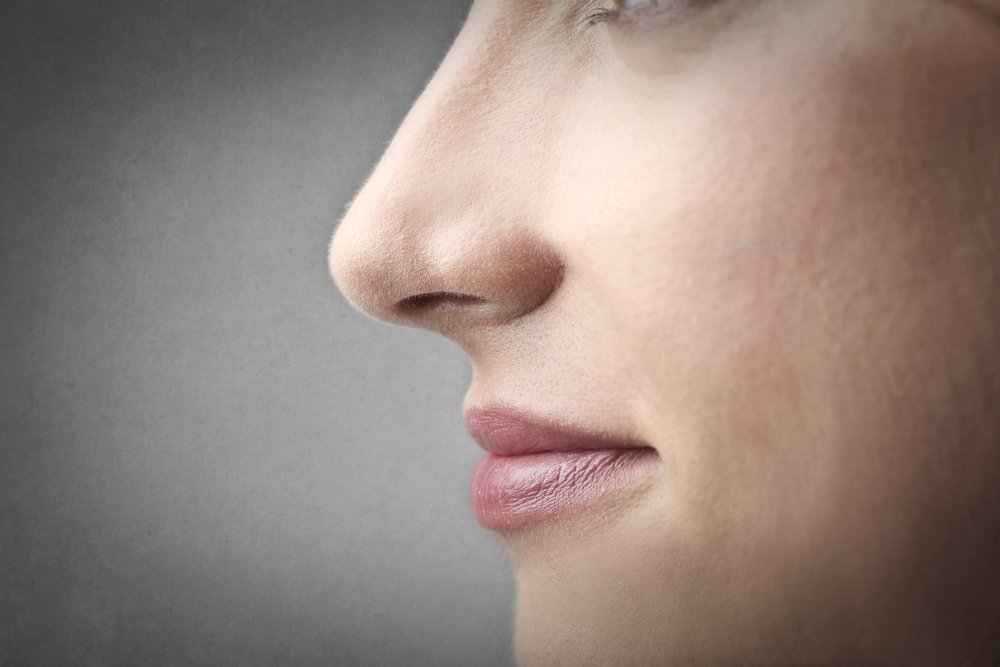 Как устроен нос?