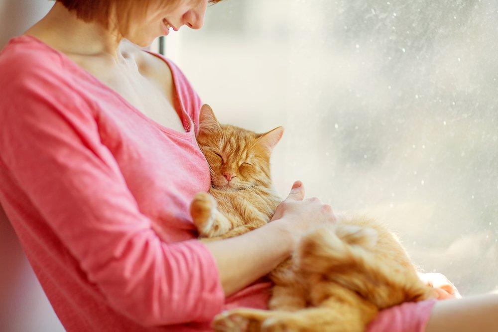 этюд зачем кошка ложится на руку ними специально