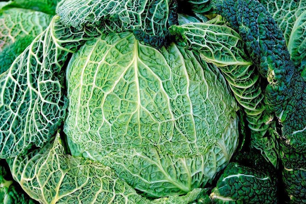 Правильное питание с савойской капустой