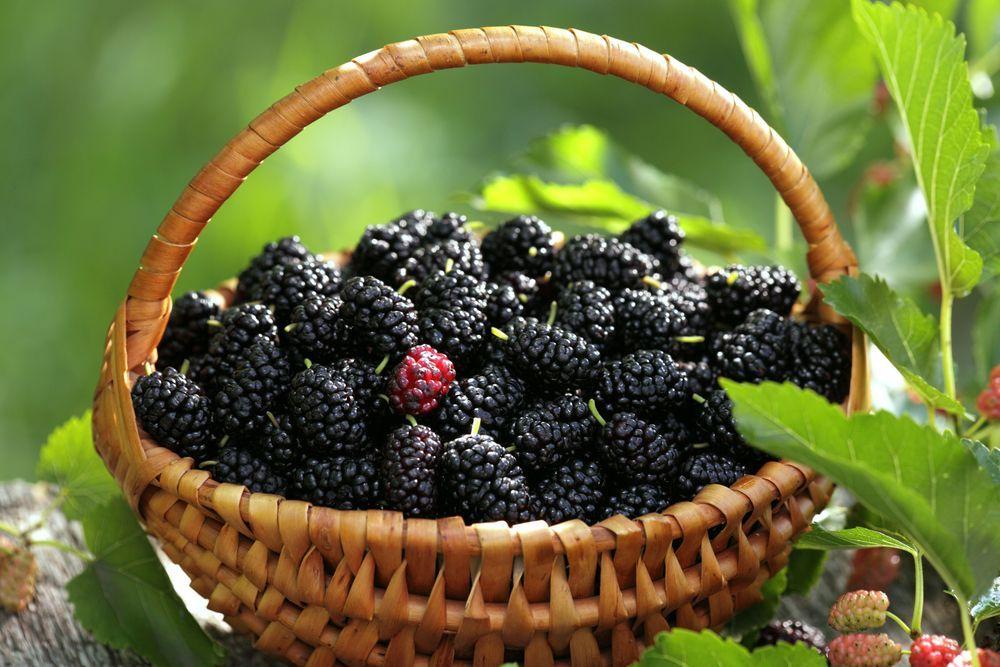 Похудение и нежная ягода