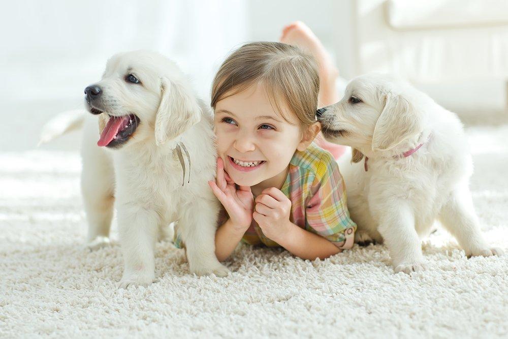 Что следует учитывать родителям, принявшим решение завести домашнего любимца?