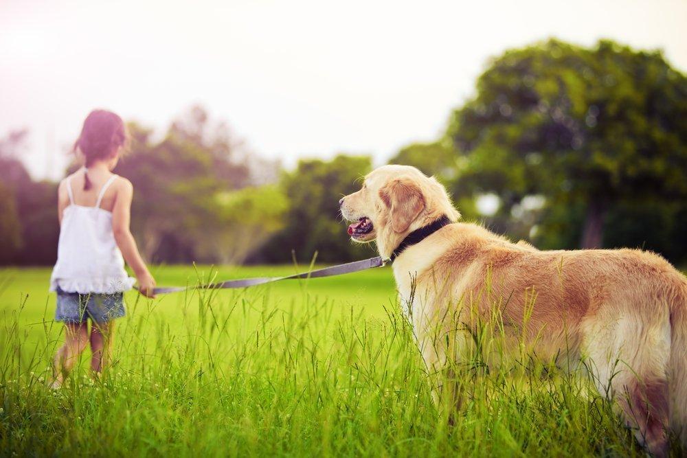Аллергия на кошек и собак