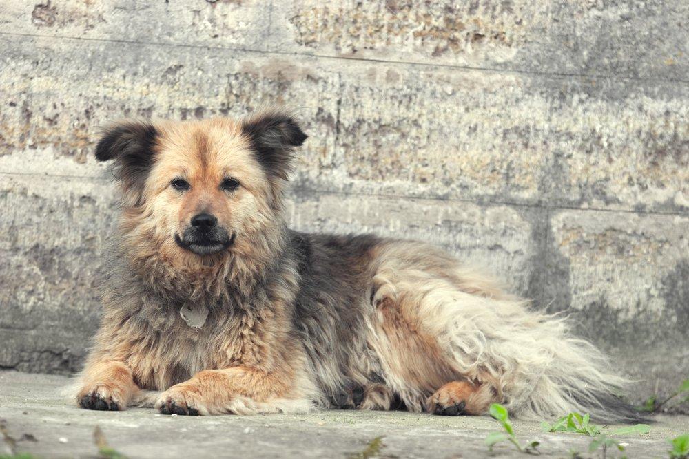 Бездомные собаки: когда друг становится бывшим