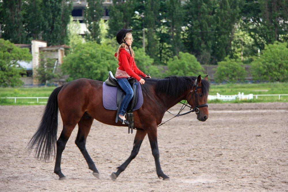 Три измерения «лечения лошадьми». Интервью с иппотерапевтом Источник: DDCoral / Shutterstock.com