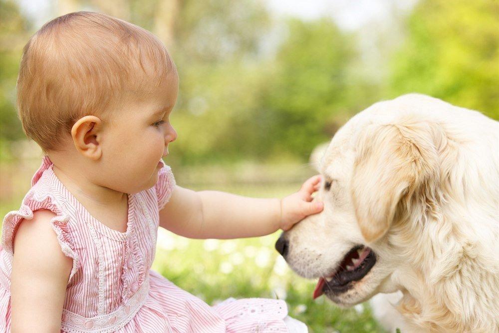 Животные как источник инфекции