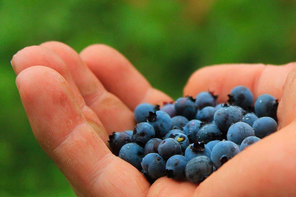 Можно ли похудеть на ягоде: варианты диеты