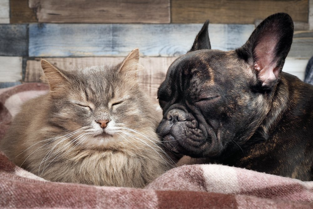 2. Дружба возможна среди животных разных видов