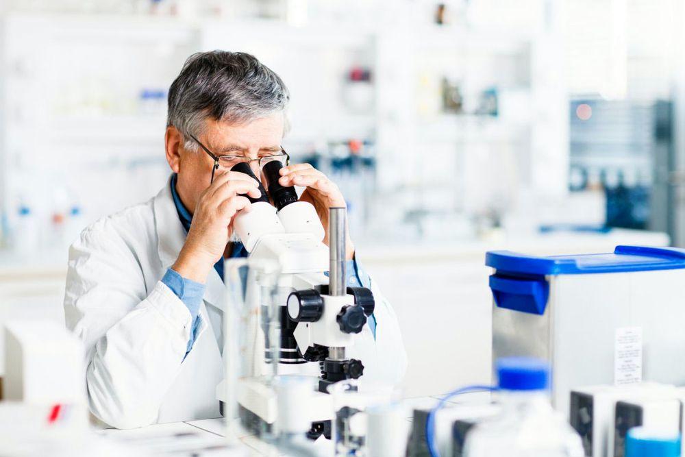 Современные исследования в мире животных