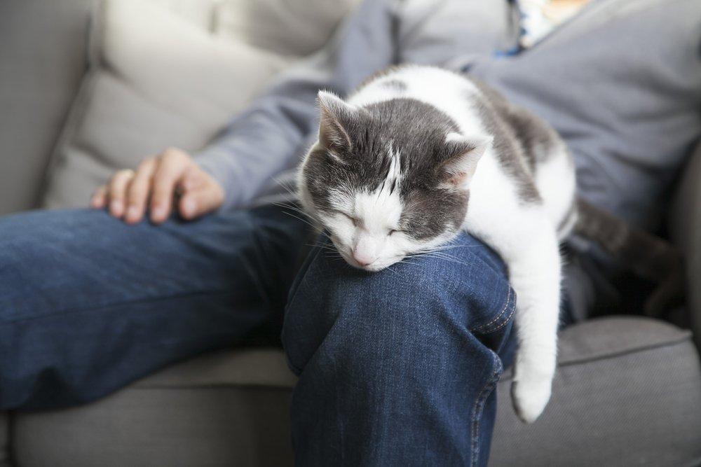 Кошки и здоровье сердца