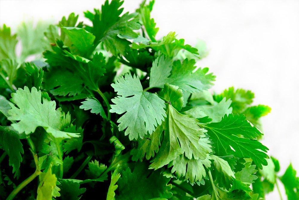 Пряная зелень в правильном питании