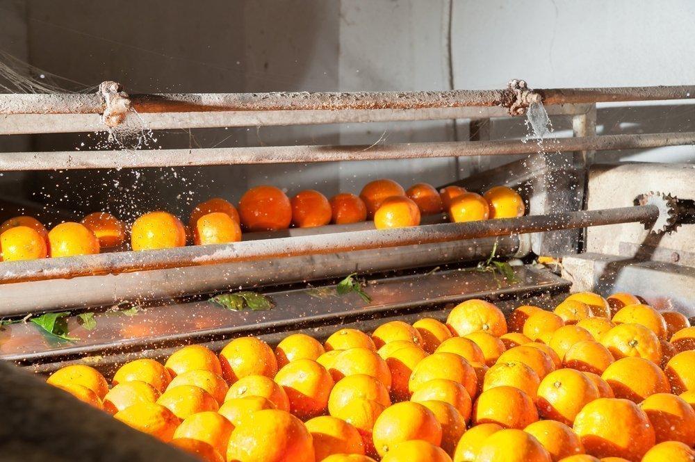 Особенности опасной обработки плодов