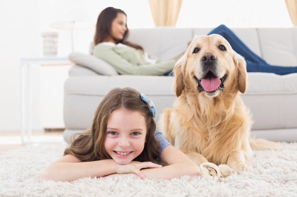 Собаки как профилактика патологий: неврозов, соматических болезней