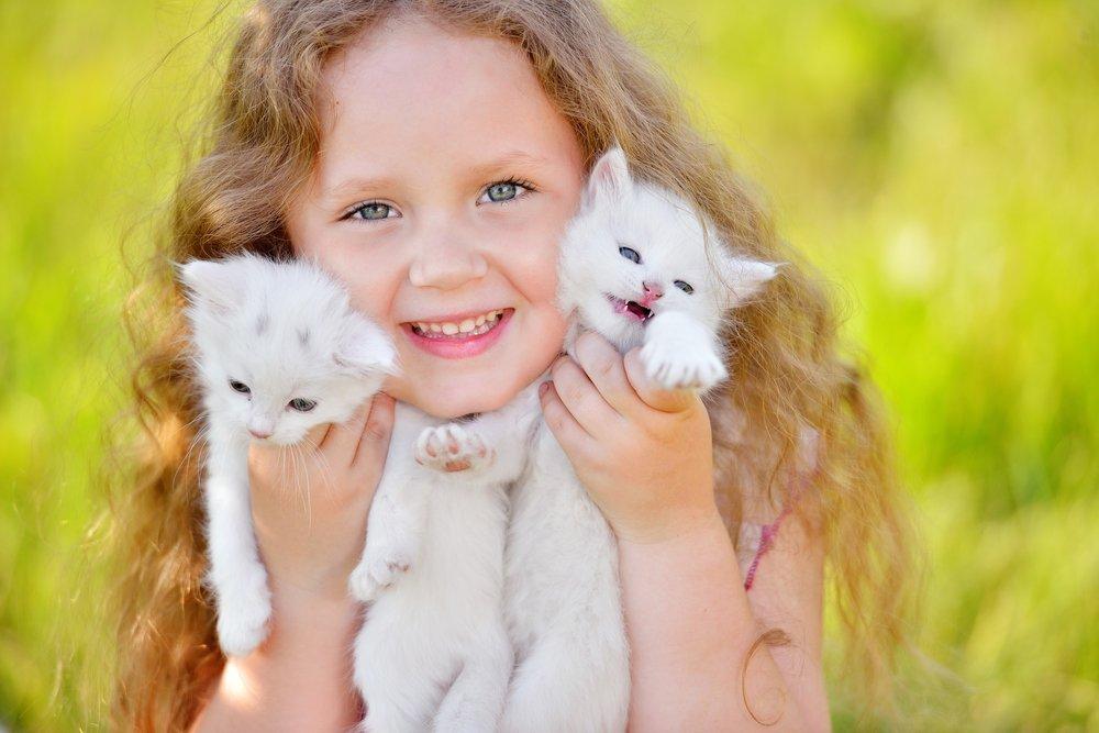 Миф №3: Сходим в гости к коту и посмотрим, будет аллергия или нет!