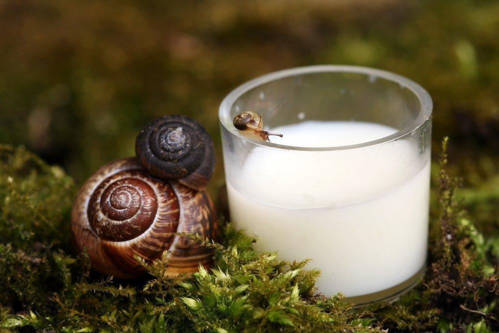 Опасные бактерии и инфекции в молоке