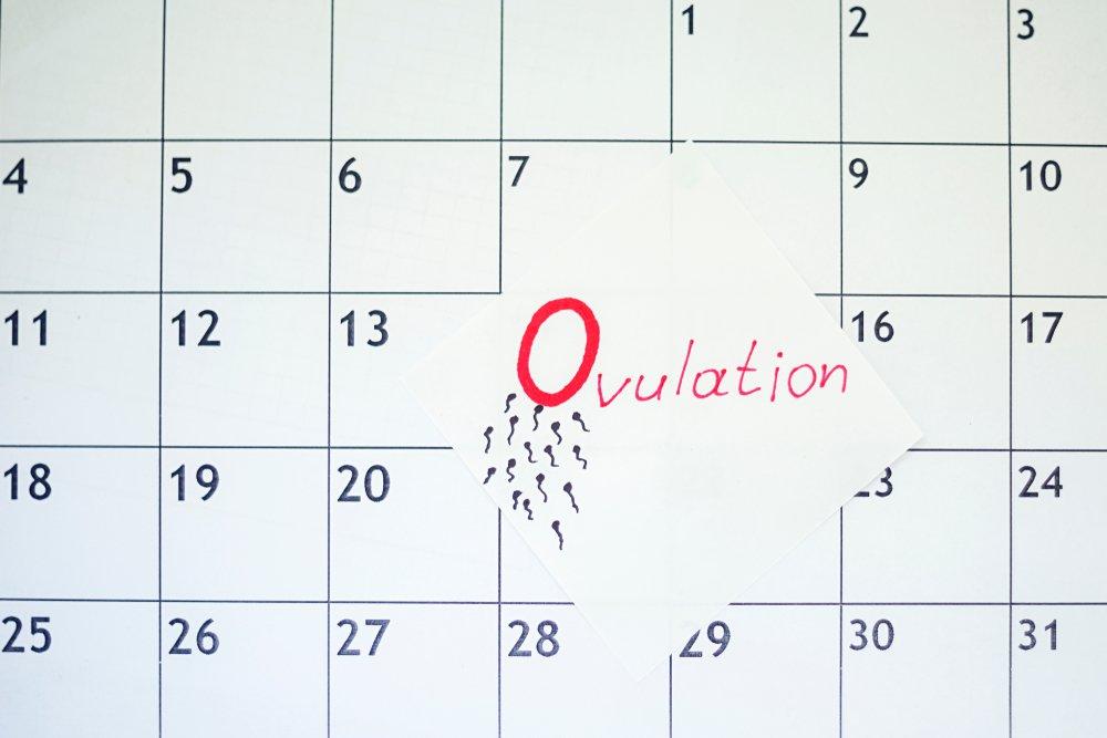 Как рассчитать овуляцию: составляем личный календарь