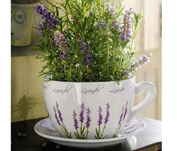 Лаванда (Lavandula) Источник: 2.bp.blogspot.com