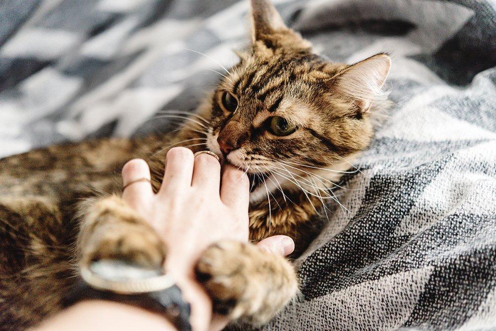 Фелиноз — болезнь кошачьих царапин