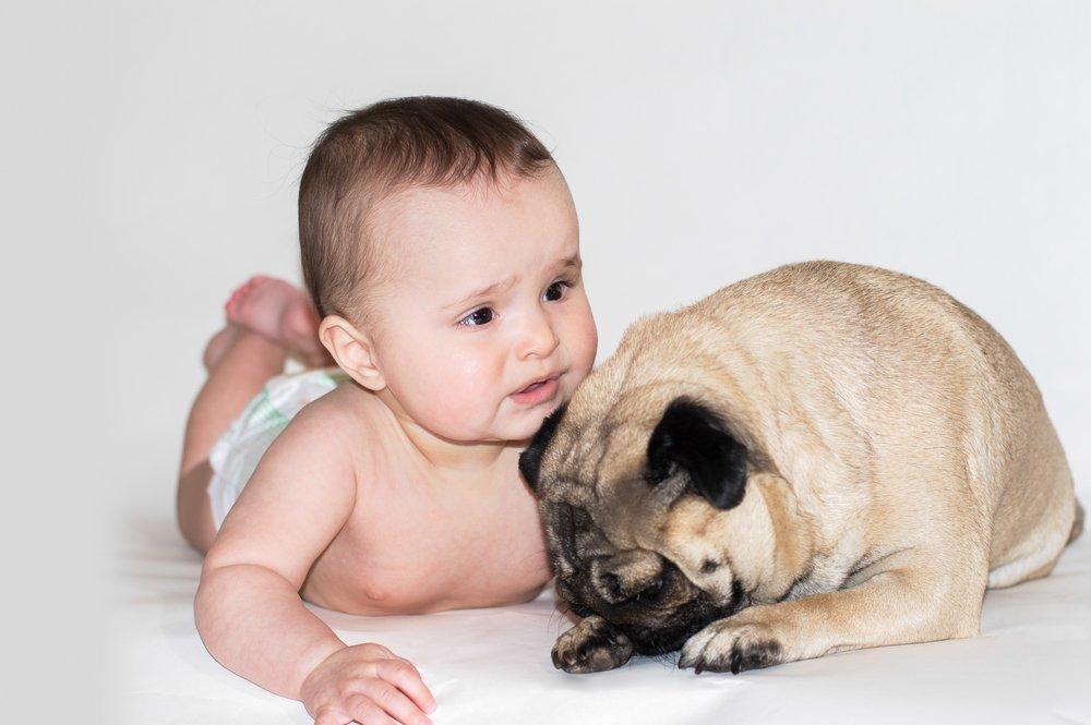 Малыш и домашние питомцы