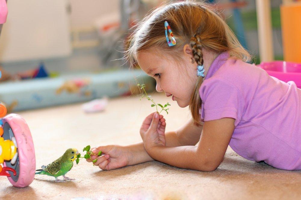 Животные и развитие ребенка