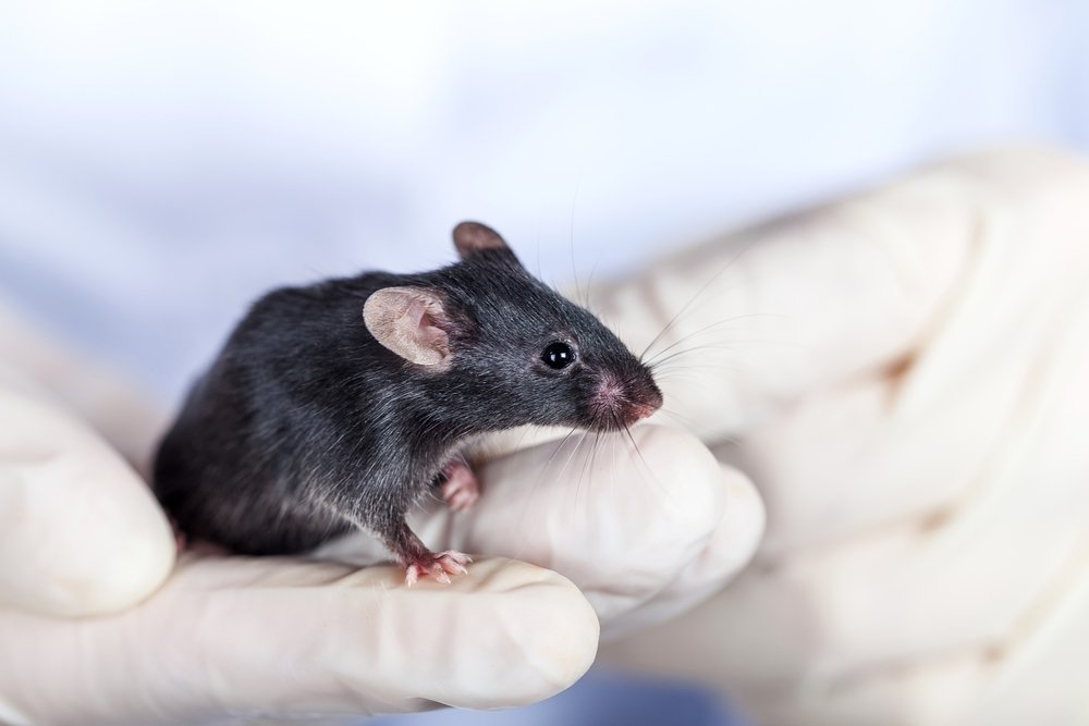 Все началось с мышей