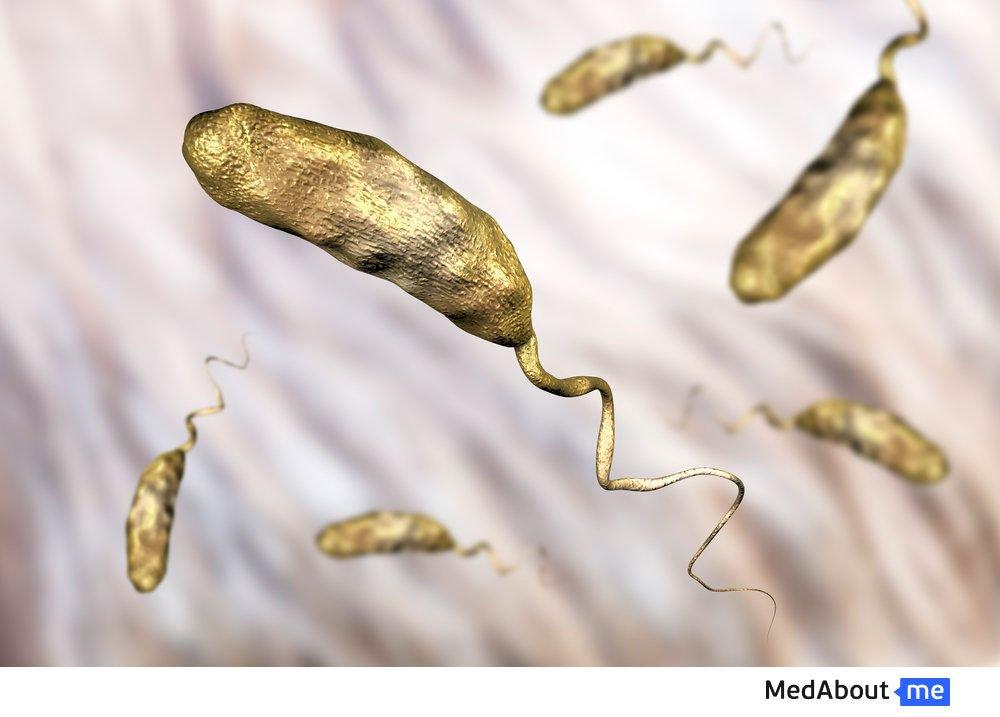 Патогенность бактерии холеры