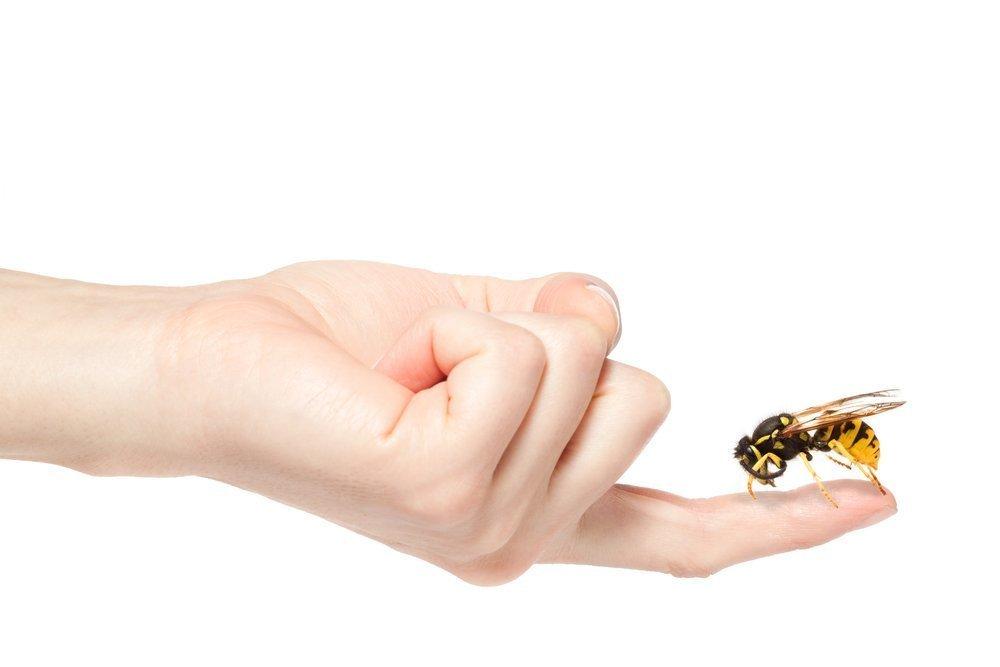 Укусы жалящих насекомых: боль, жжение, отек