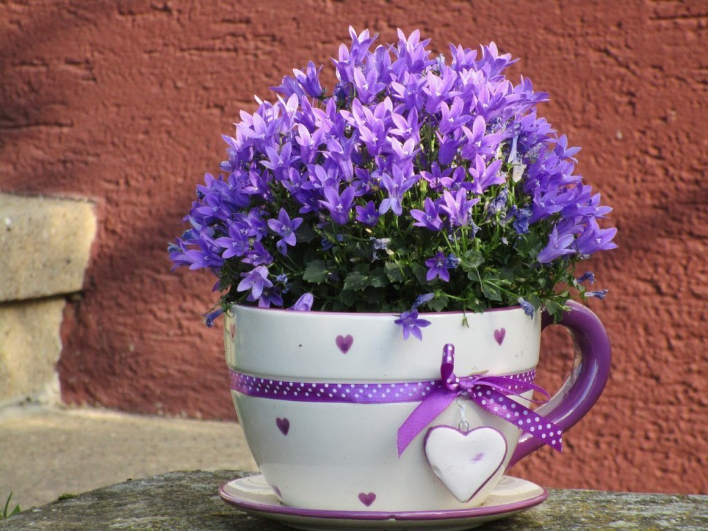 Растениям необходима любовь и общение