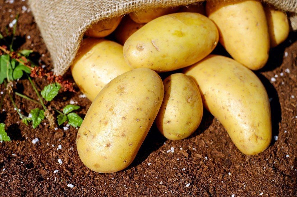 Какие овощи могут вызвать отравление?