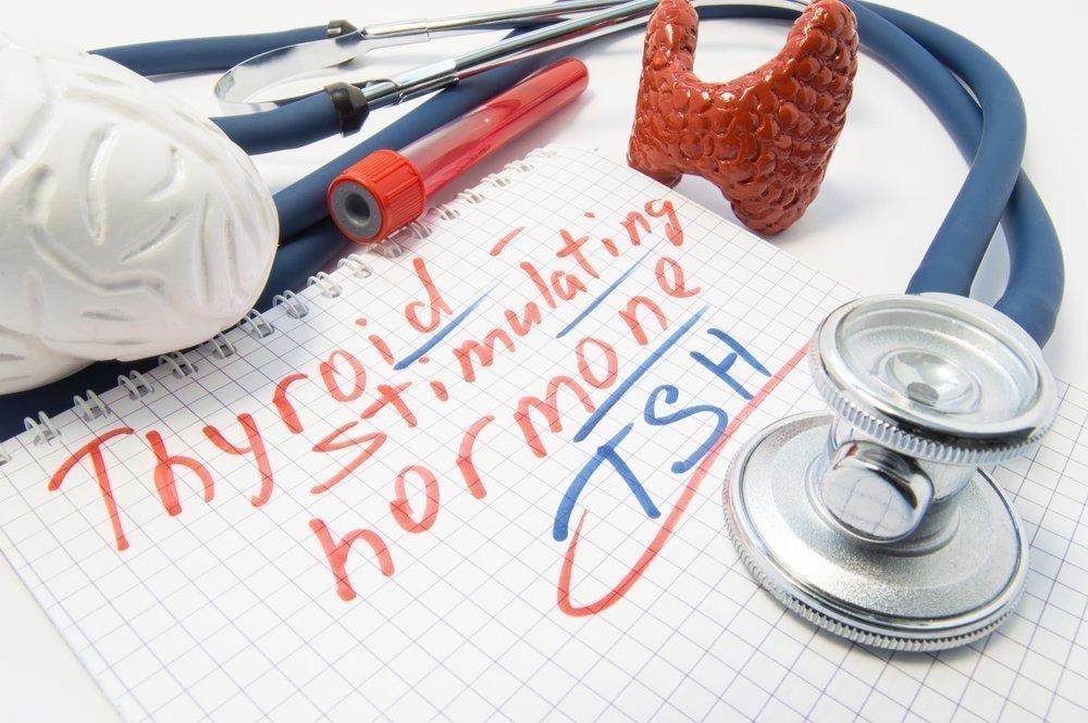 Какие гормоны вырабатывает щитовидная железа?