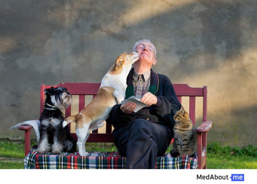 Анималотерапия для пожилых людей