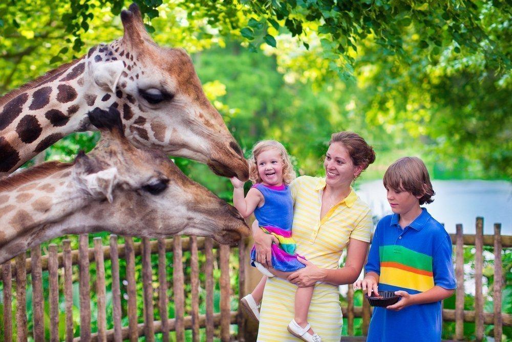 Дети в контактном зоопарке